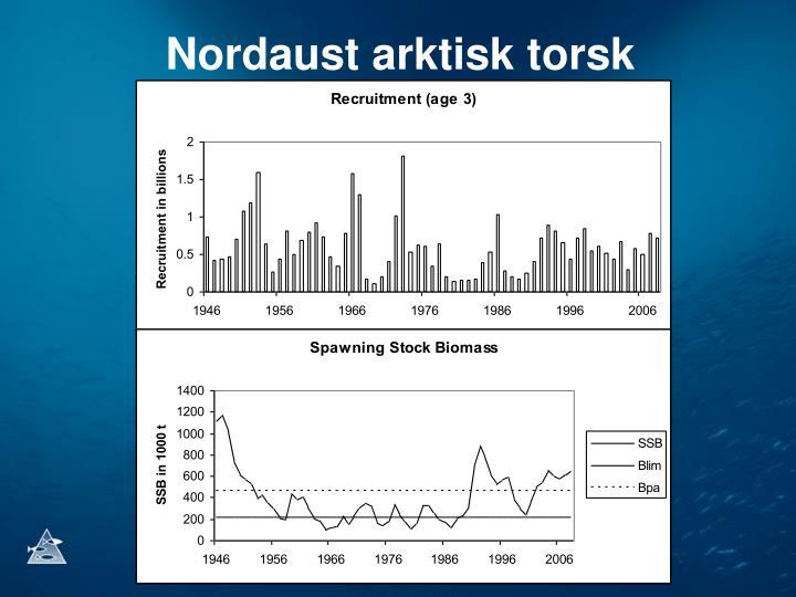 Nordaust arktisk torsk