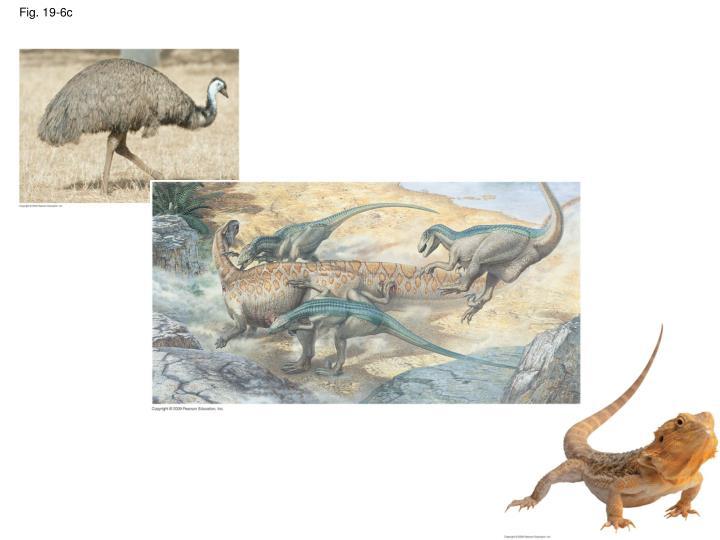 Fig. 19-6c