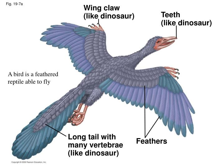 Wing claw