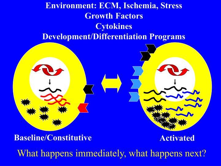 Environment: ECM, Ischemia, Stress