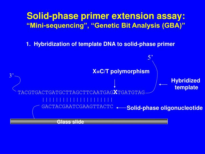 Solid-phase primer extension assay: