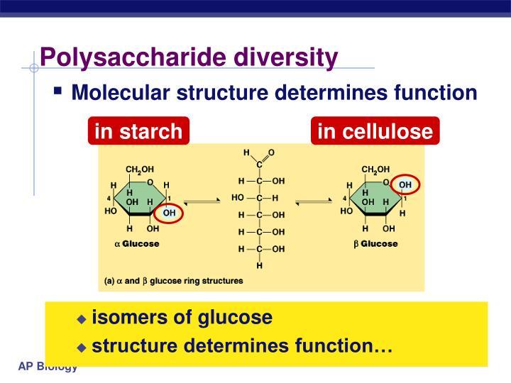 Polysaccharide diversity