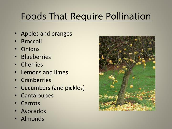 Foods That Require Pollination