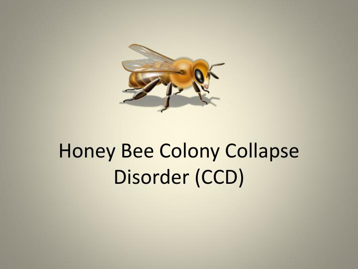 Honey bee colony collapse disorder ccd