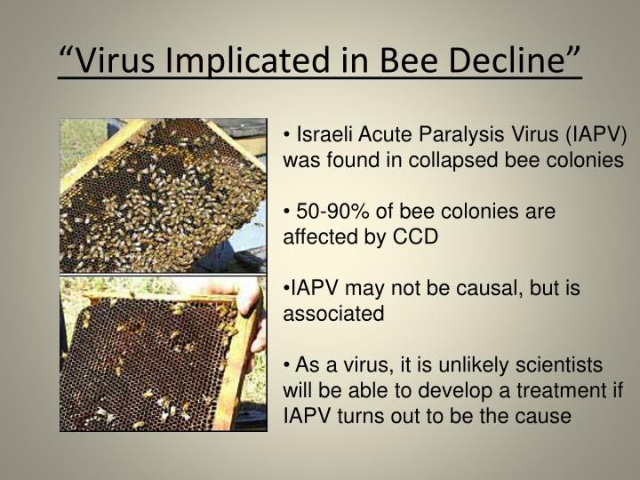 """""""Virus Implicated in Bee Decline"""""""