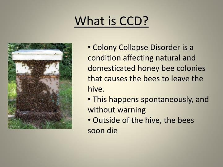 What is CCD?