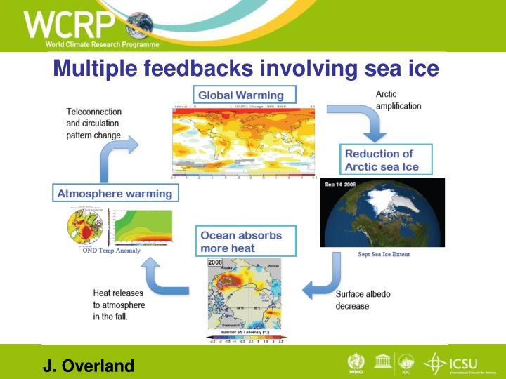 Multiple feedbacks involving sea ice