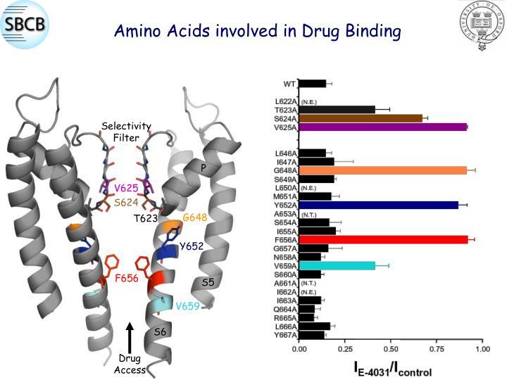 Amino Acids involved in Drug Binding