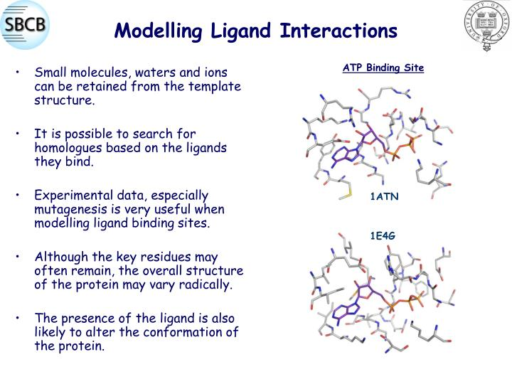 Modelling Ligand Interactions
