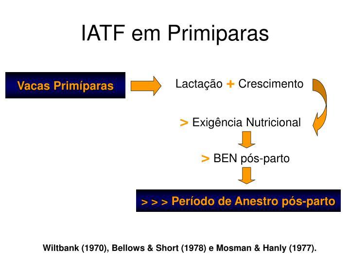 IATF em Primiparas