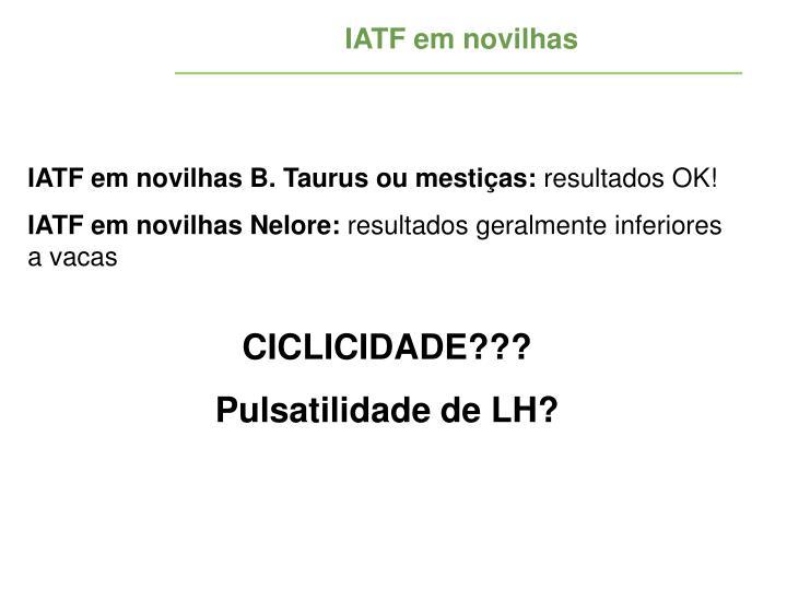 IATF em novilhas