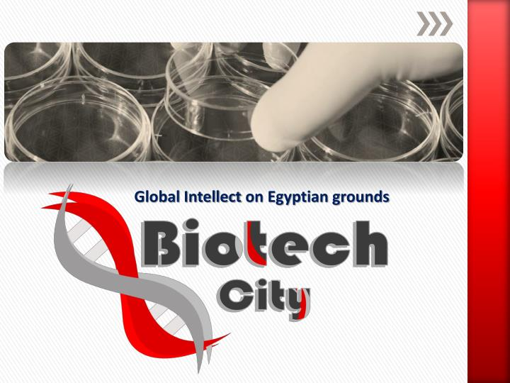 global intellect on egyptian grounds