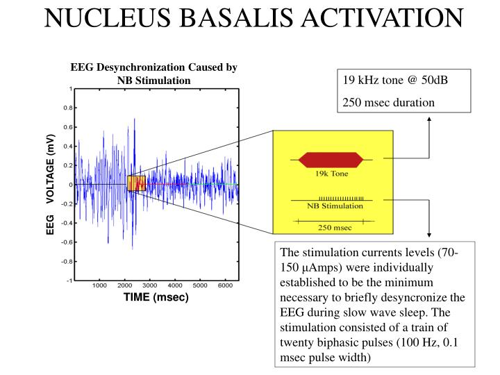 NUCLEUS BASALIS ACTIVATION