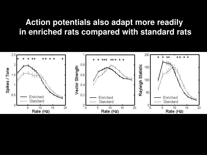 Action potentials also adapt more readily