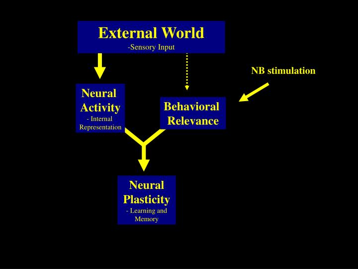External World