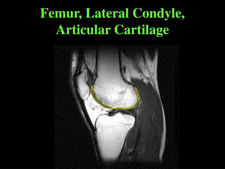 Femur, Lateral Condyle, Articular Cartilage