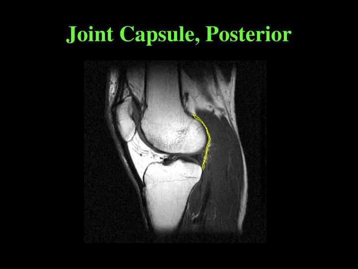 Joint Capsule, Posterior