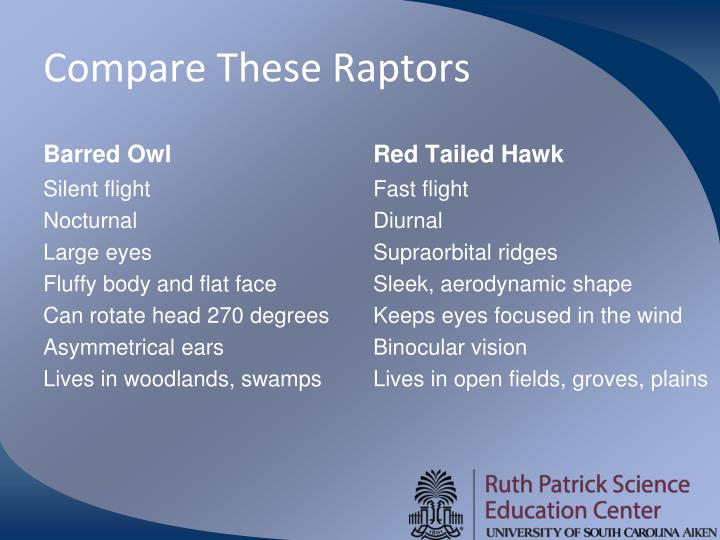 Compare These Raptors