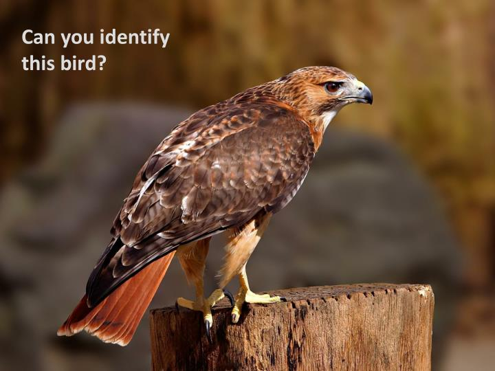 Can you identify this bird?