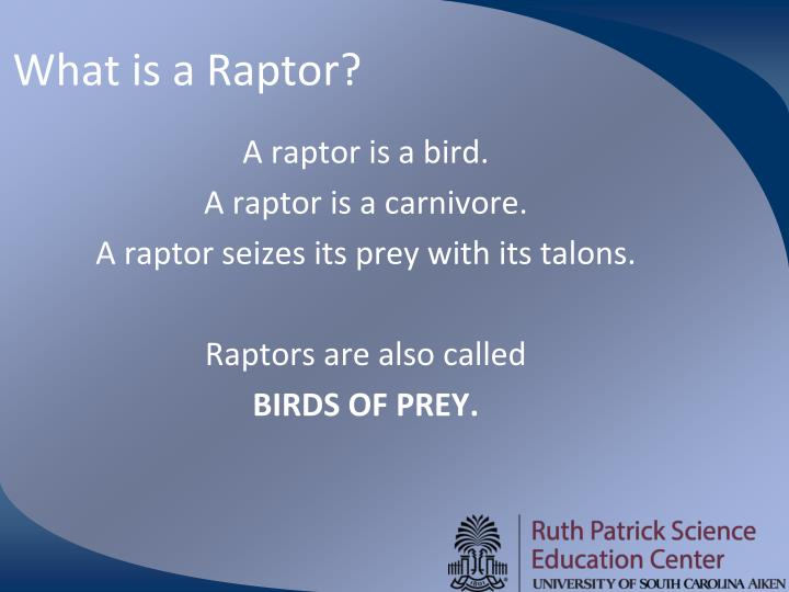 What is a Raptor?