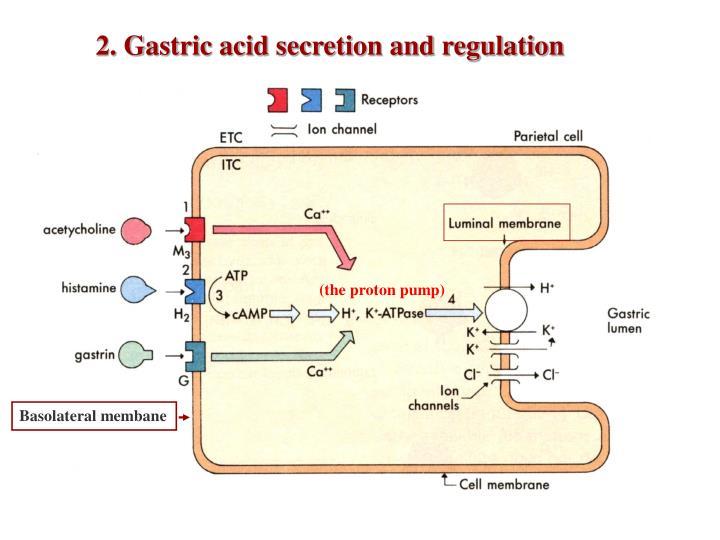 2. Gastric acid secretion and regulation