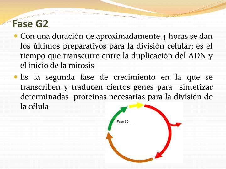 Fase G2