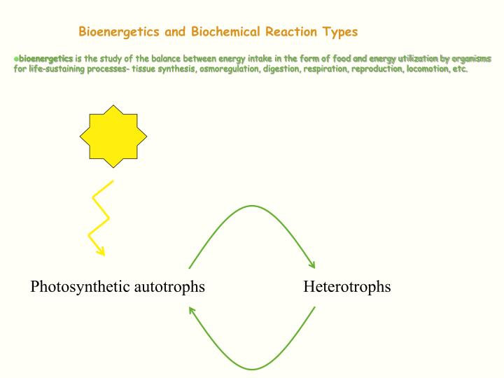Bioenergetics and biochemical reaction types