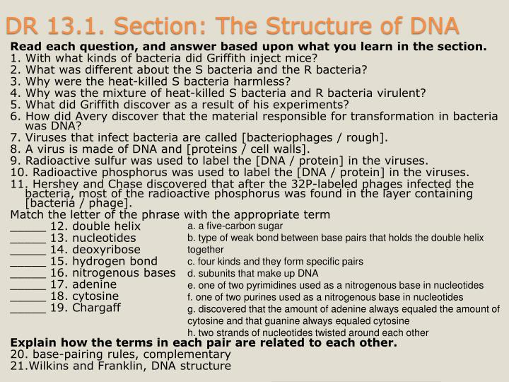 Dr 13 1 section the structure of dna
