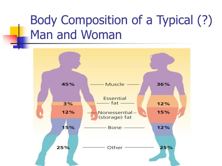 Body Composition of a Typical (?) Man and Woman