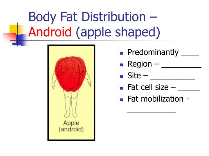 Body Fat Distribution –
