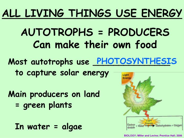AUTOTROPHS = PRODUCERS