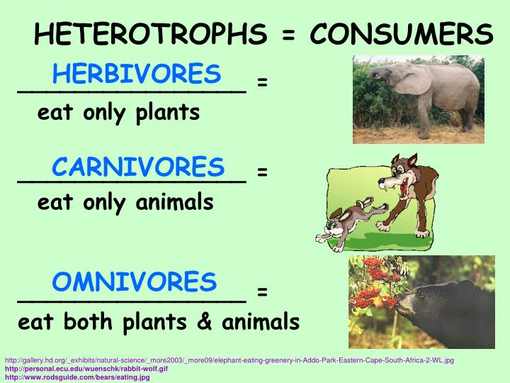 HETEROTROPHS = CONSUMERS