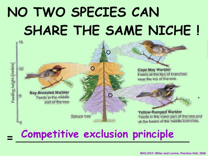 NO TWO SPECIES CAN