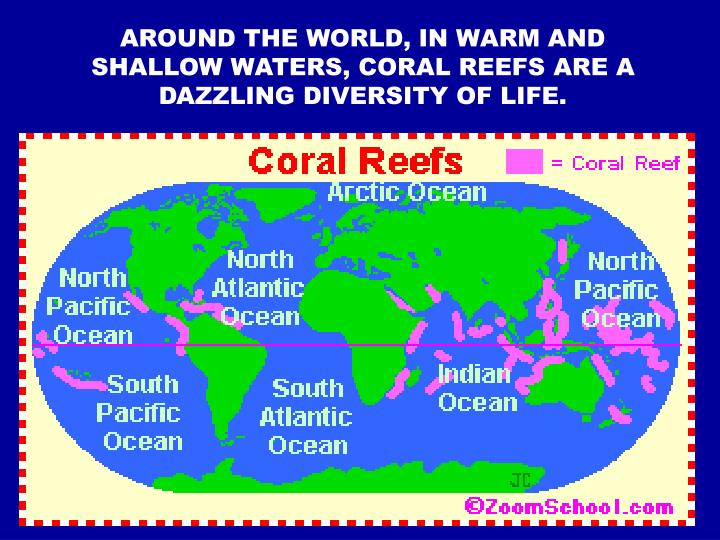AROUND THE WORLD, IN WARM AND SHALLOW WATERS, CORAL REEFS ARE A DAZZLING DIVERSITY OF LIFE.