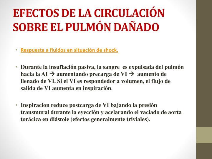 EFECTOS DE LA CIRCULACIÓN SOBRE EL PULMÓN DAÑADO