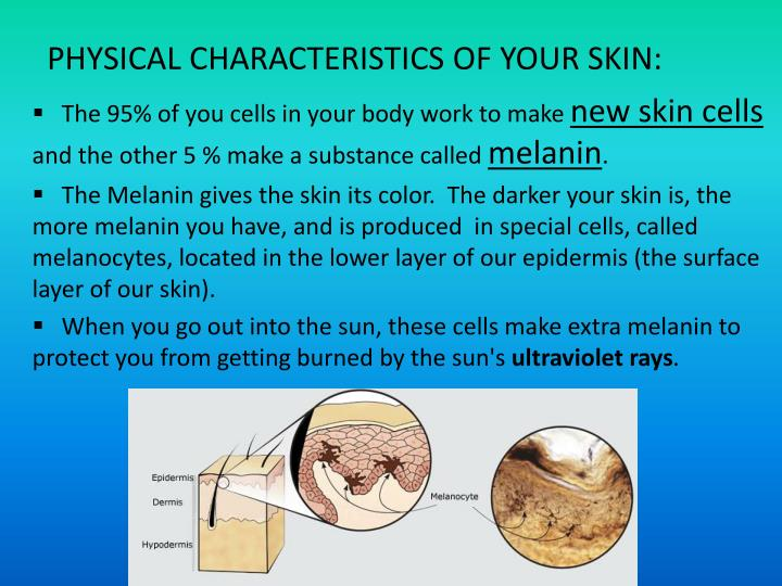 PHYSICAL CHARACTERISTICS OF YOUR SKIN: