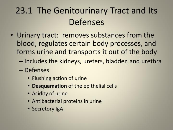 23 1 the genitourinary tract and its defenses