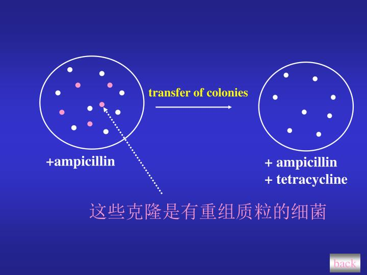 transfer of colonies