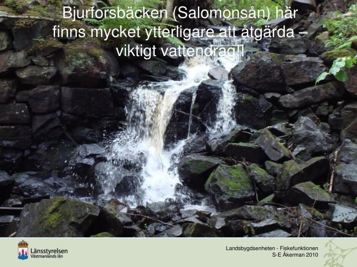 Bjurforsbäcken (Salomonsån) här finns mycket ytterligare att åtgärda – viktigt vattendrag!!