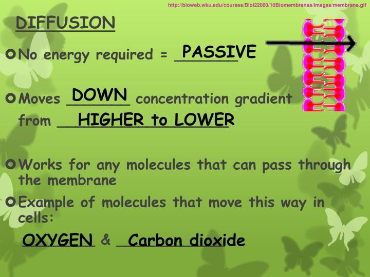 http://bioweb.wku.edu/courses/Biol22000/10Biomembranes/images/membrane.gif