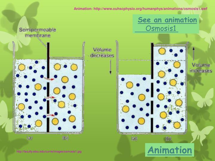 Animation: http://www.ouhscphysio.org/humanphys/animations/osmosis1.swf