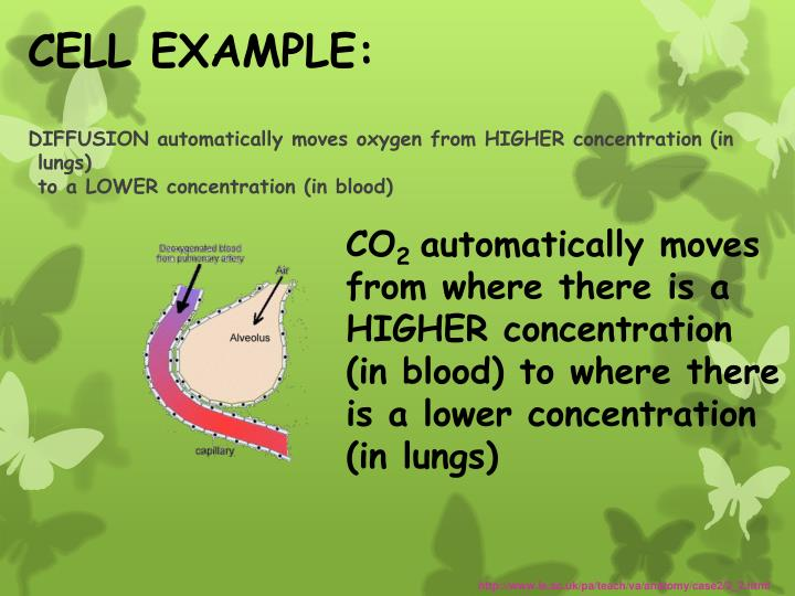 CELL EXAMPLE:
