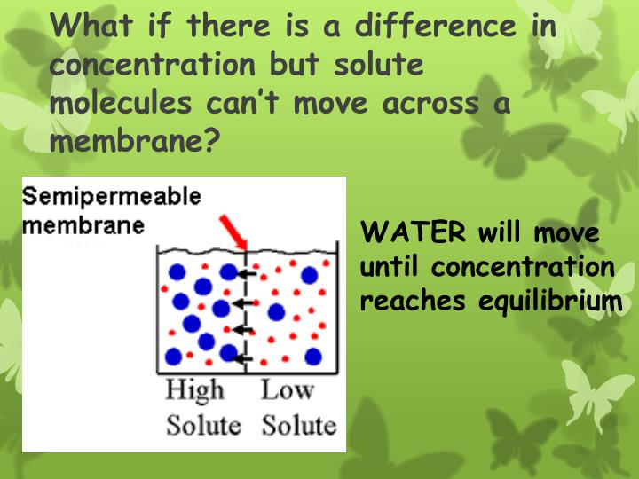 What if there is a difference in concentration but solute molecules can't move across a membrane?