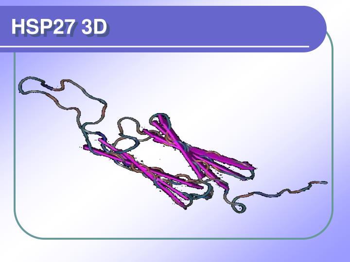 HSP27