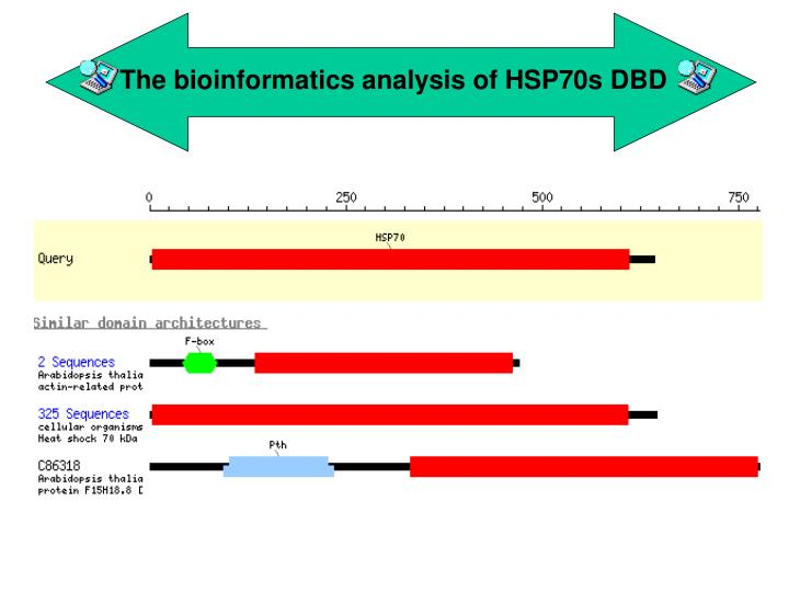 The bioinformatics analysis of HSP70s DBD
