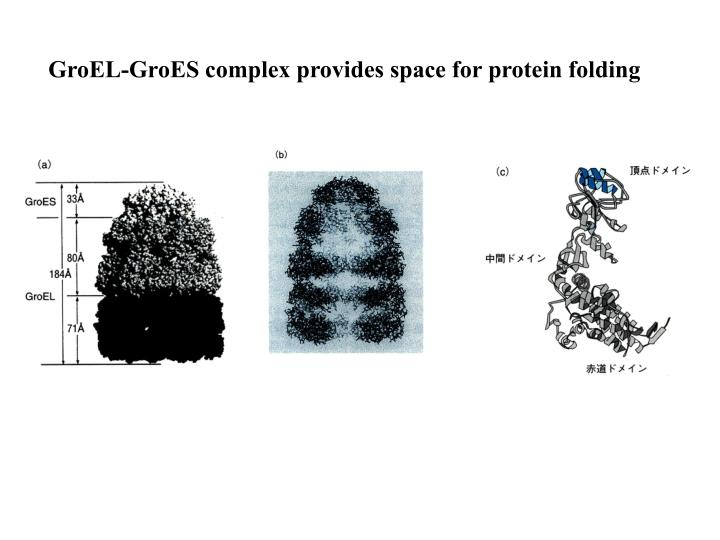 GroEL-GroES complex provides space for protein folding