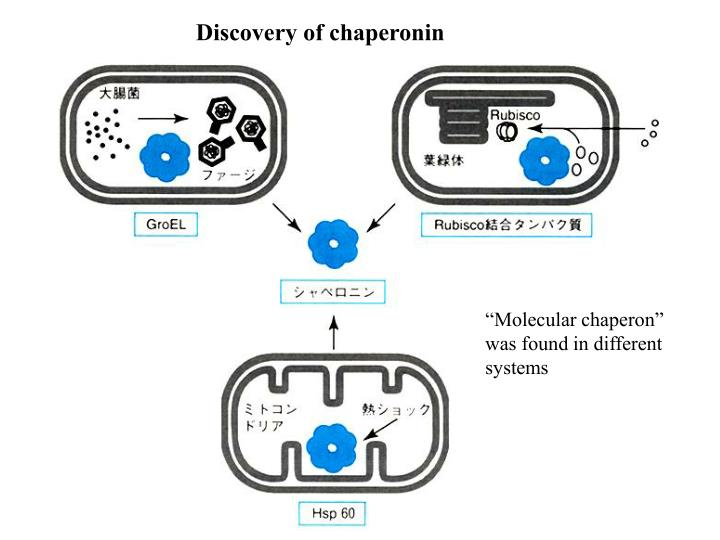 Discovery of chaperonin