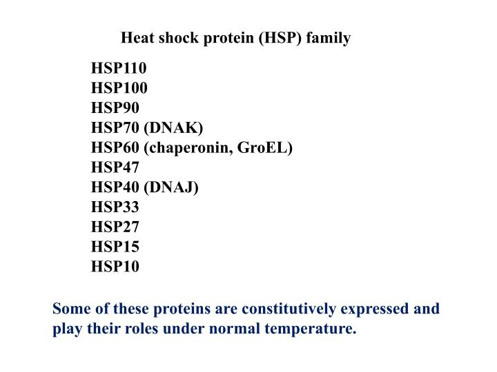 Heat shock protein (HSP) family