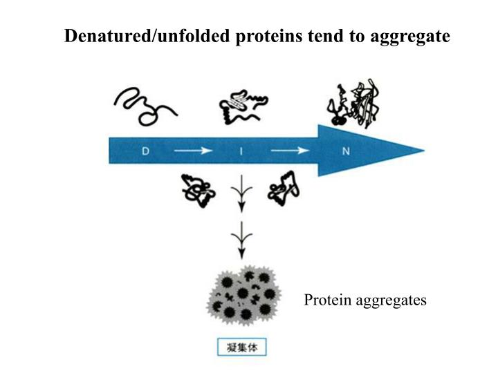 Denatured/unfolded proteins tend to aggregate