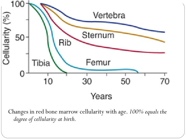 Changes in red bone marrow